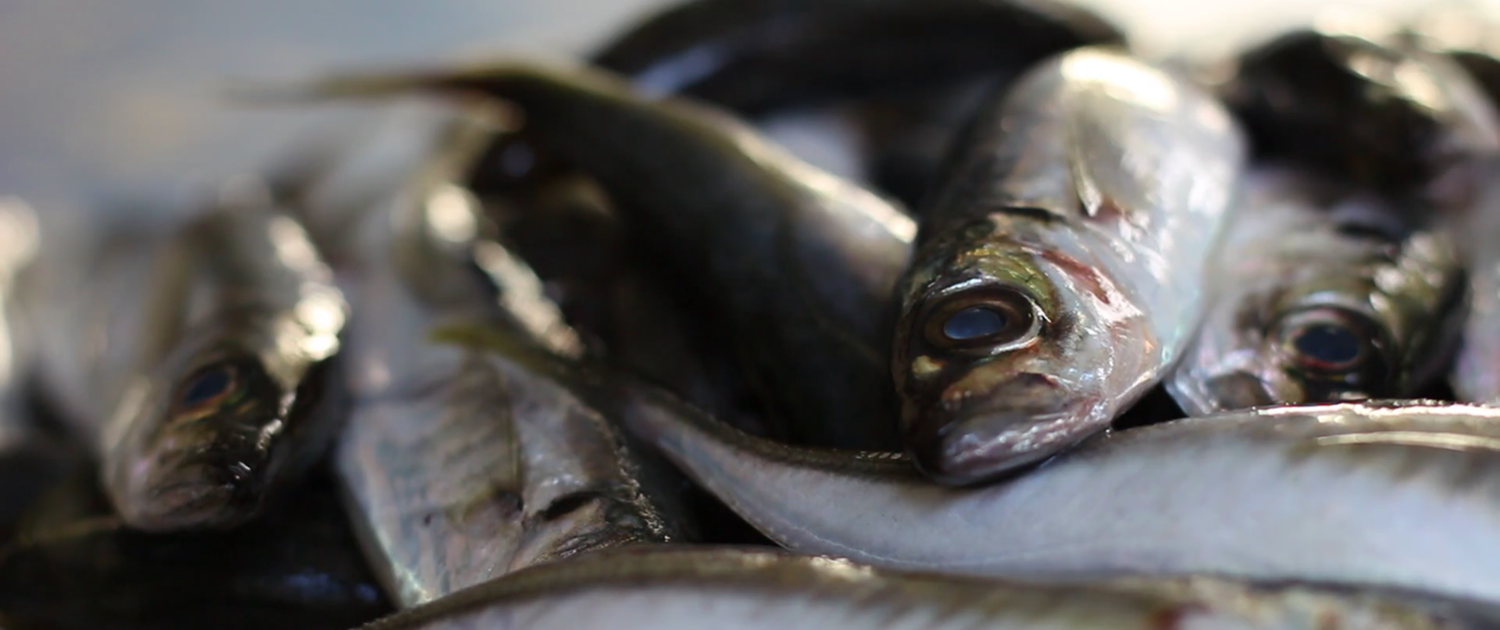 buy mackerel fish online